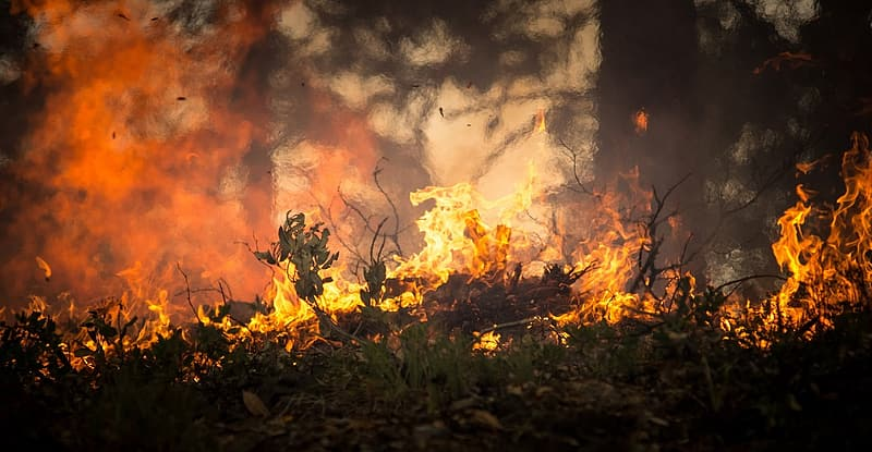 Forest being burned