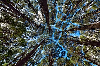 Low-angle photograph of trees