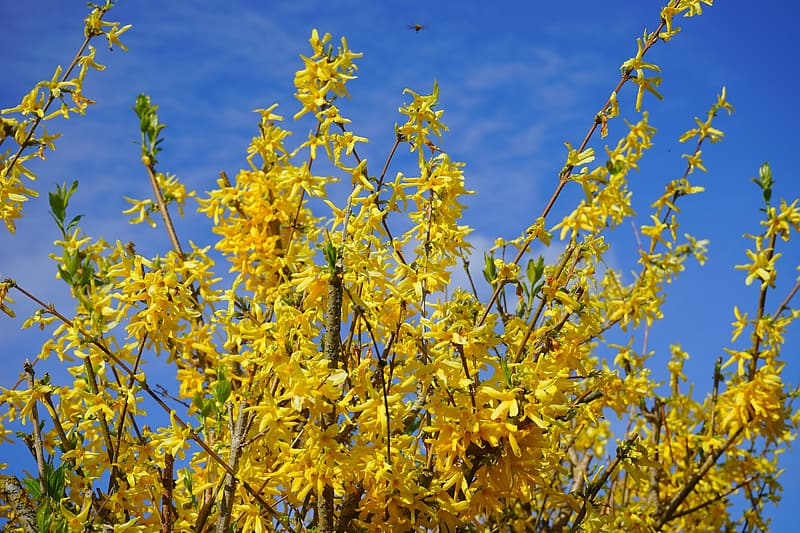 Yellow flowers under blue sky during daytime