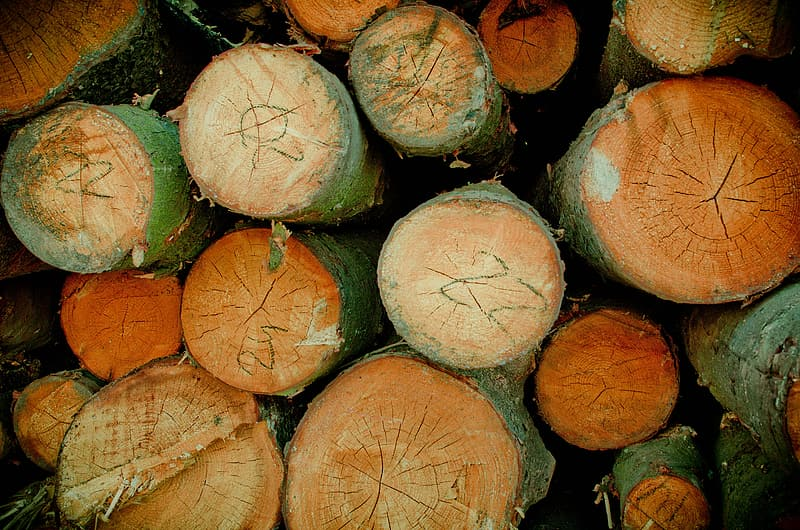 Pile of brown and green logs