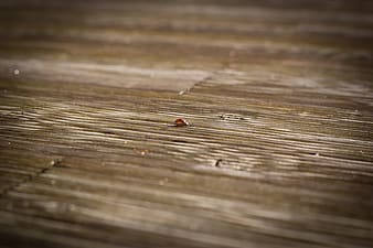 Red and black ladybug on brown wooden surface