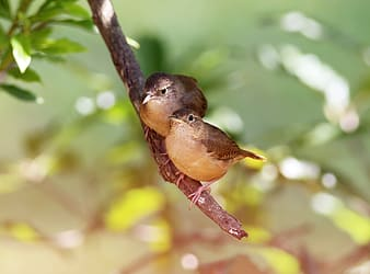 Two brown birds on tree branch during daytime