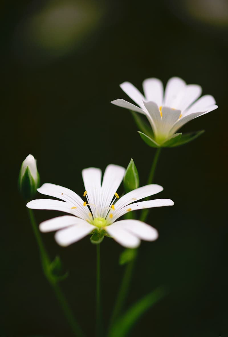Close-up selective focus photo of white petaled flowers