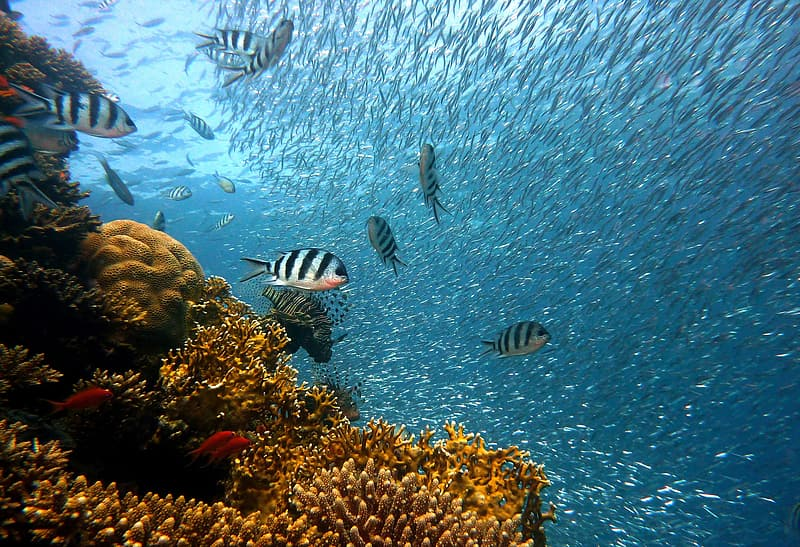 Underwater photography of shoal of fish