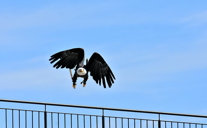 Black and white eagle flying under blue sky during daytime