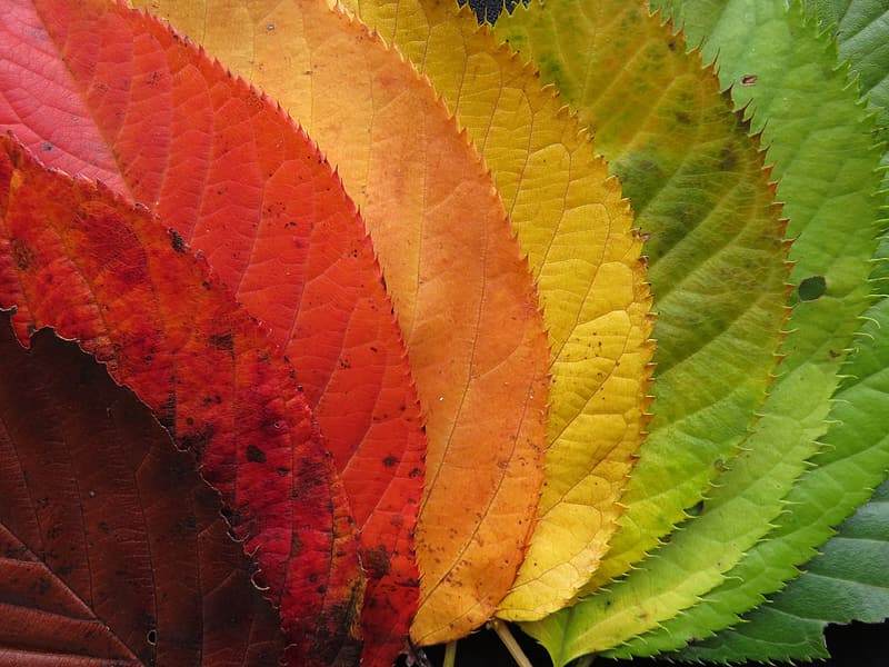 Top view photography of eight assorted-color leaves