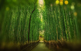 Selective focus photography of straight pathway between bamboo trees