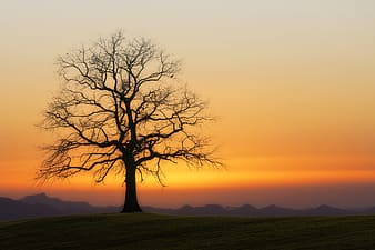 Leafless tree on green grass field during sunset
