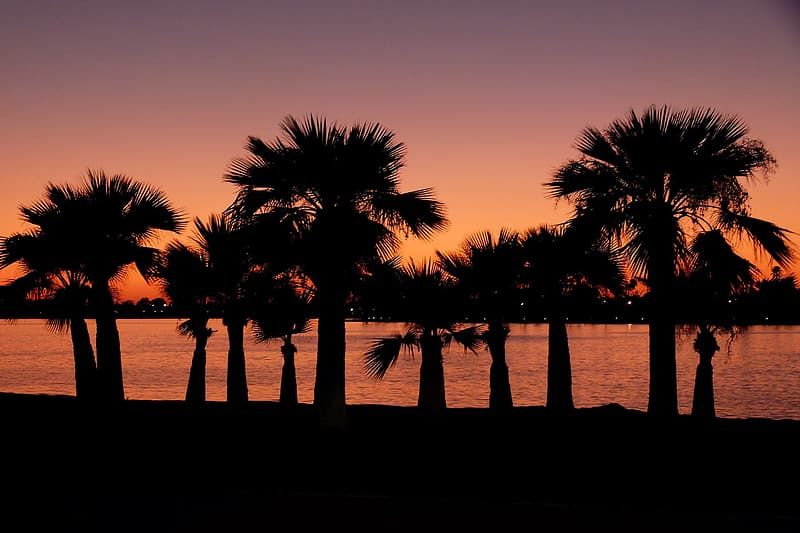 Silhouette of palm trees near body of water during golden hour