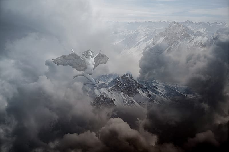 White bird flying over the clouds