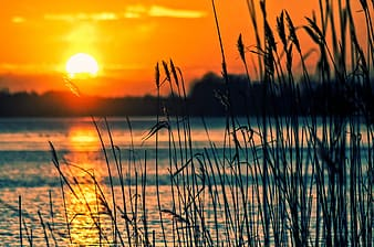 Photography of grass beside body of water during golden hour