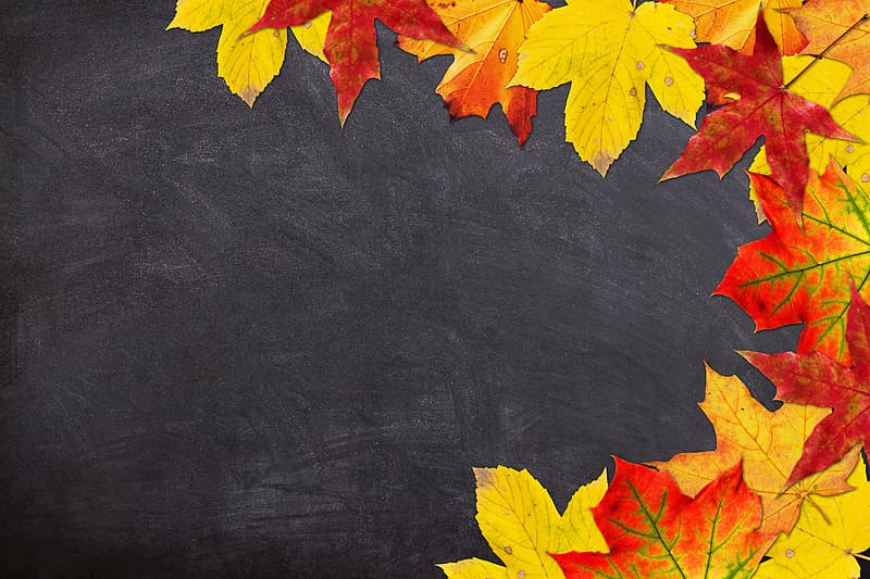Red and yellow maple leaves digital wallpaper