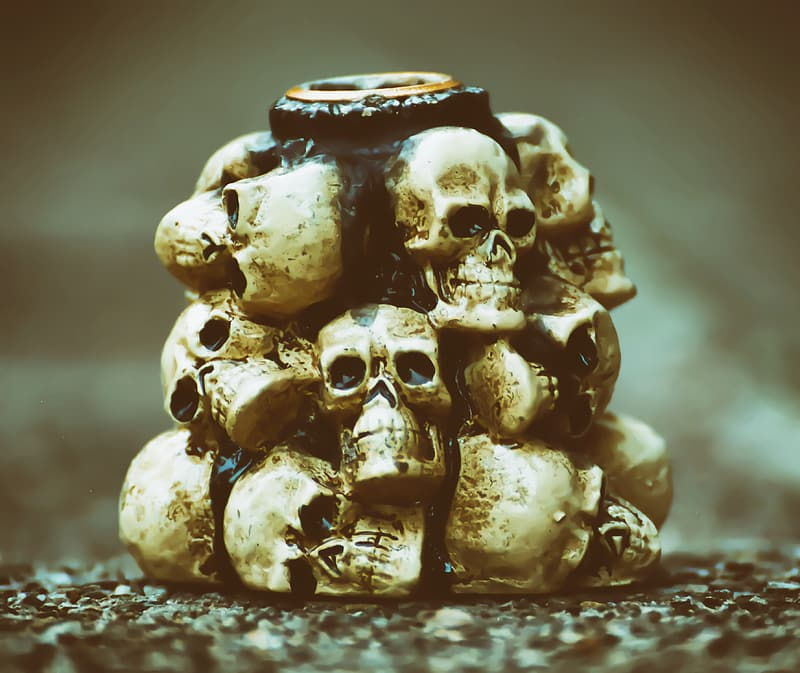 Grayscale photo of skull on table