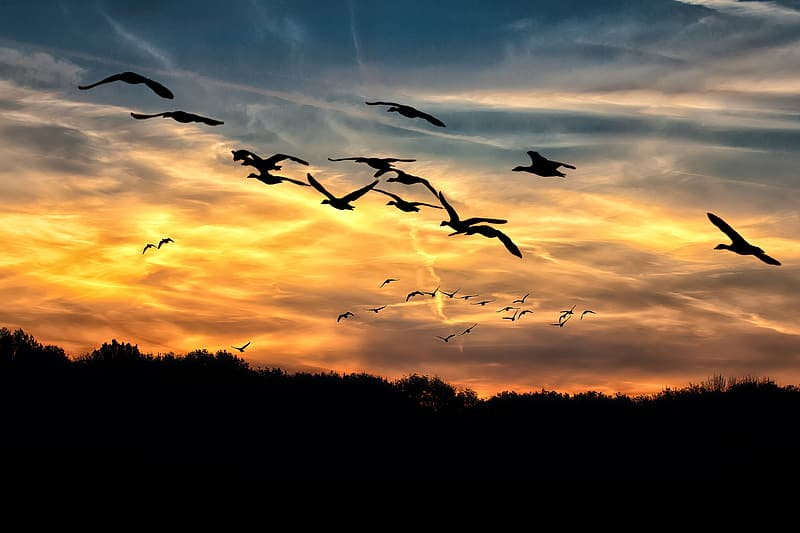 Silhouette photography of flock of birds