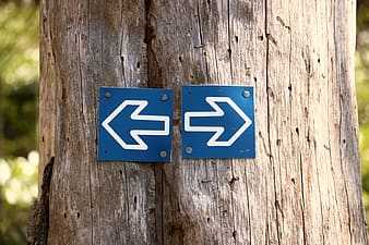 Blue-and-white left and right direction arrows on tree trunk