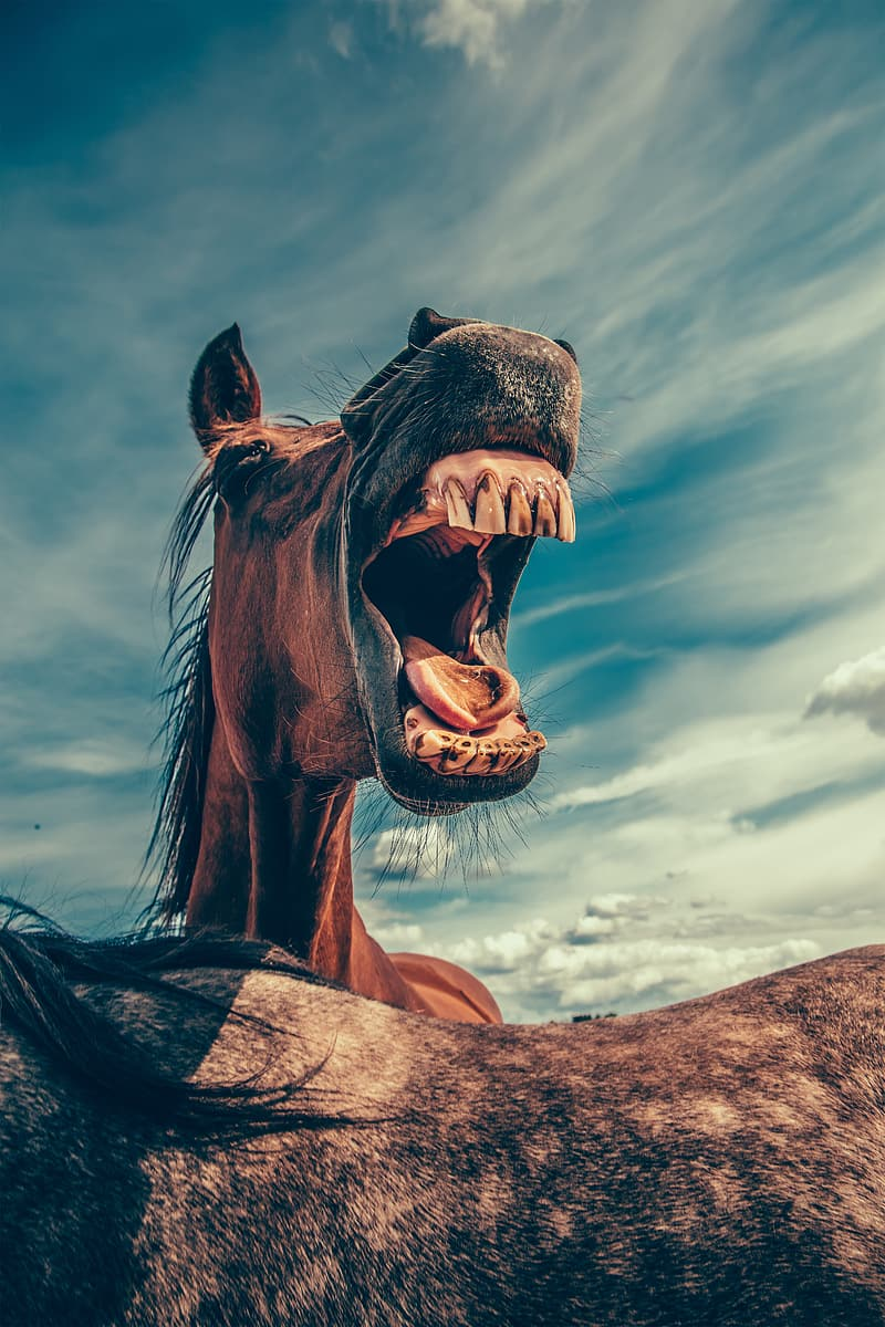 Brown horse with mouth open