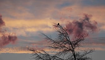 Photography of tree during sunset