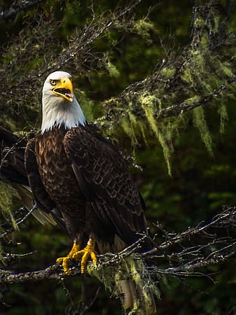 White and black eagle on tree branch during daytime
