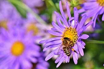 Purple flower with bee in macro photography