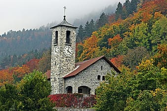 Chapel surrounded by forest during daytime