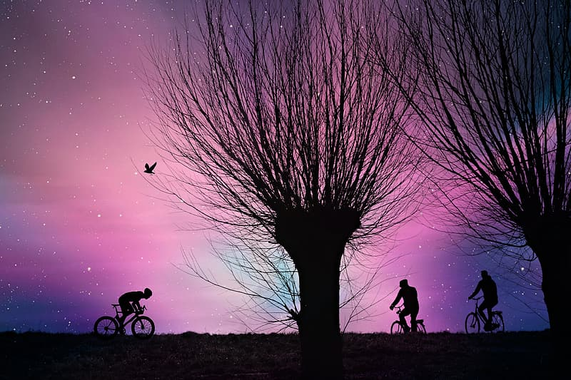 Silhouette of 2 people riding bicycle during sunset