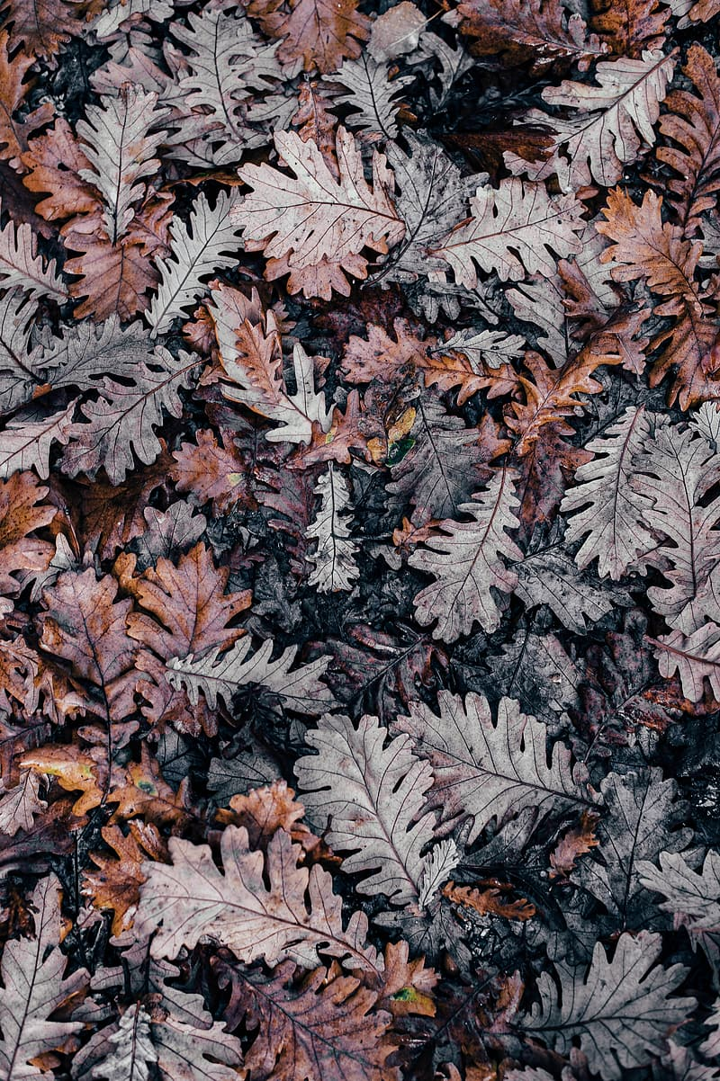 Shallow photo of dry leaves