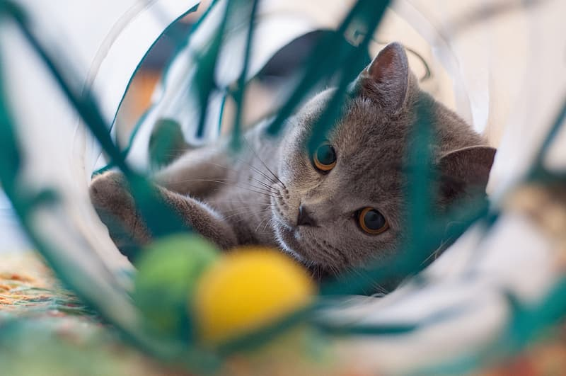 Gray cat playing on container