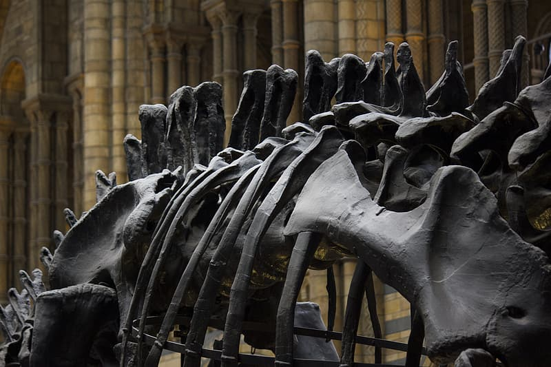 Black metal horse statue in close up photography