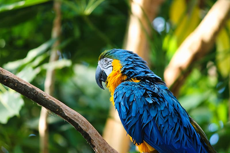 Blue and yellow macaw perched on brown tree branch during daytime