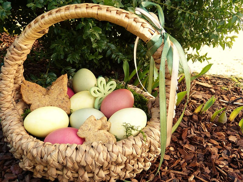 Clutch of poultry eggs in wicker basket