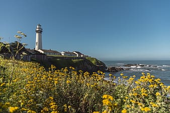 Yellow flower field near lighthouse during daytime
