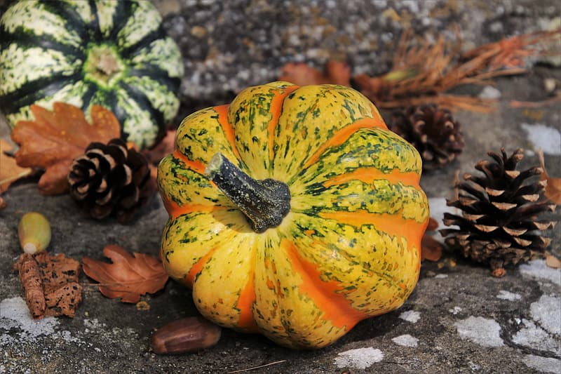 Yellow and green pumpkin on brown soil