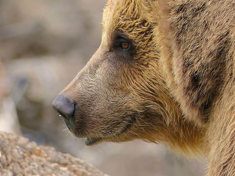 Shallow focus photography of brown bear