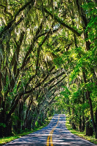 Blacktop road covered with green leafed trees