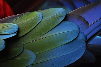 Photo of gray and green feathers