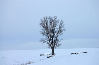 Bare tree on snow covered ground under gray sky during daytime