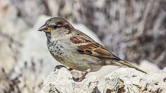 Gray and brown bird on gray stone