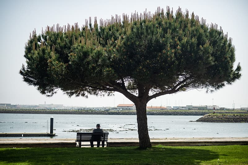 Green tree beside bench near body of water during daytime
