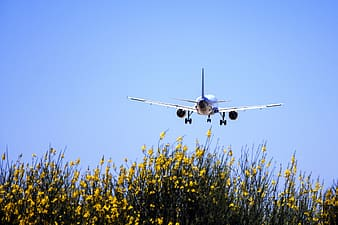 White and blue aircraft flying above yellow flowering plants