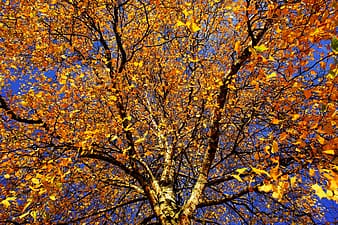 Yellow leaf tree under clear blue sky during daytime