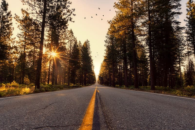Gray asphalt road in middle of pine trees under yellow sunset