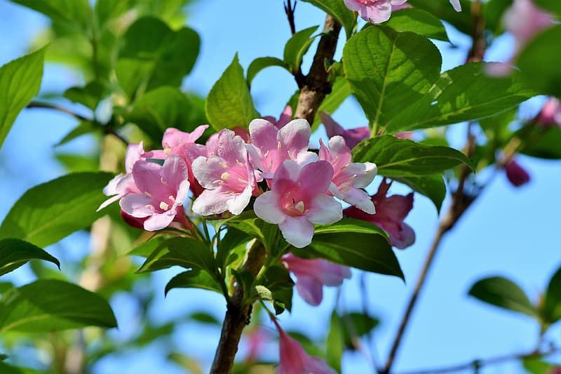Shallow focus photography of white and pink flowers with green leaves on branch during daytime