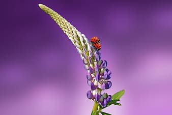 Green and purple flower with shallow background