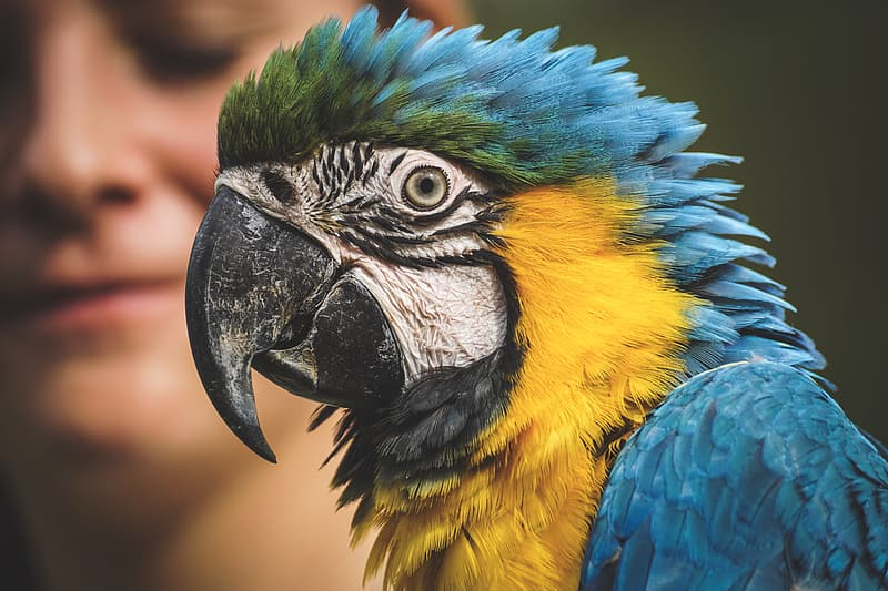 Blue yellow and green macaw