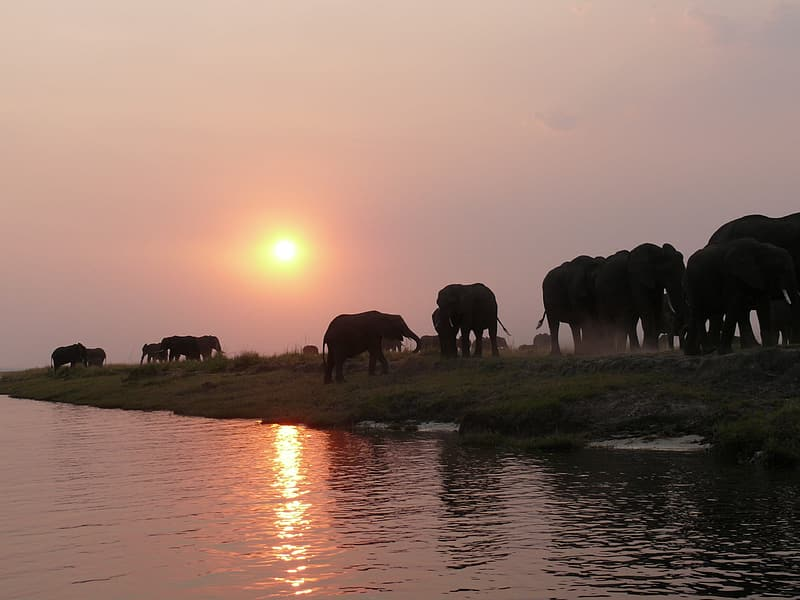 Elephants walking near body of water