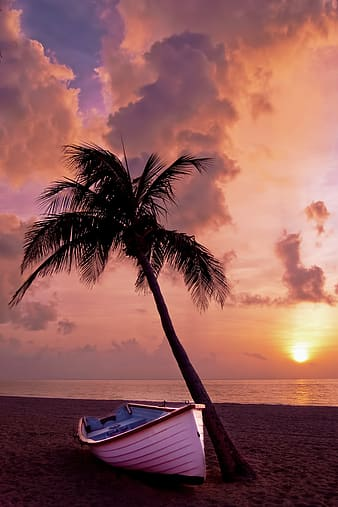 White boat beside coconut tree on the beach during sunset