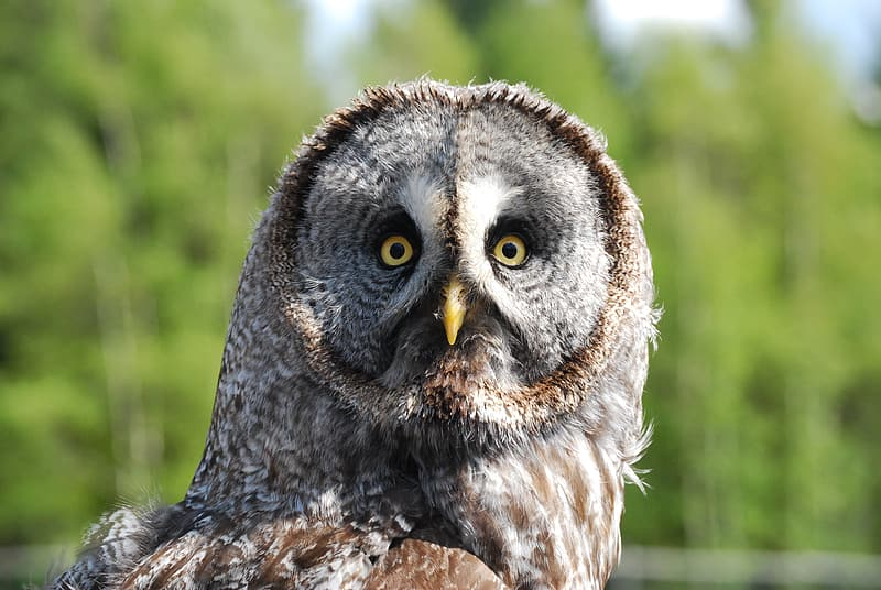 Closeup selective focus photo of brown and gray owl