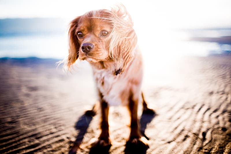 Shallow focus photography of long-coated brown dog during daytime