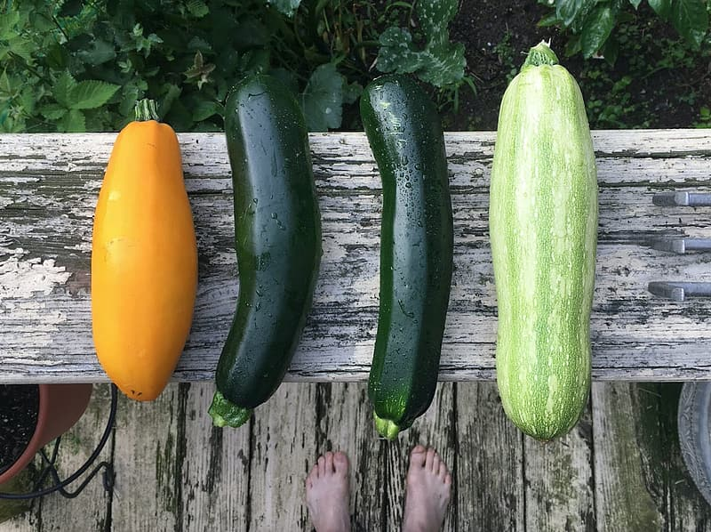 Four types of zucchinis