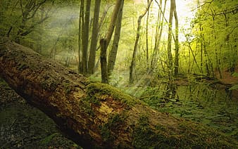log, dead wood, moss, forest, trees, nature, landscape, incidence of light, lighting, nature reserve